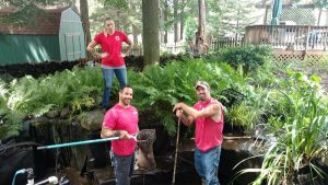 rochester landscaping and hardscapes